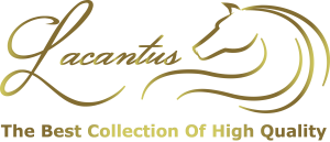 The Best Collection High Quality